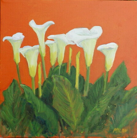 Colorful Callas (sold)